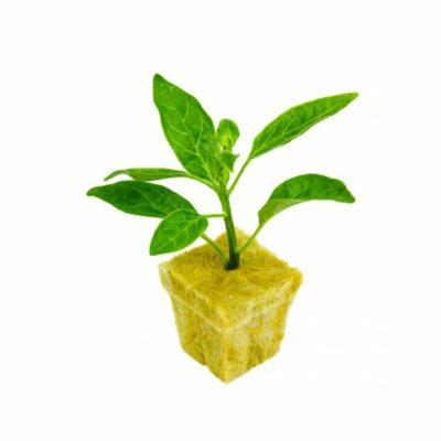 קוביות להשרשה וייחור צמחים