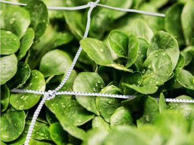 רשת לעגבניות הדליית צמחים בגינה