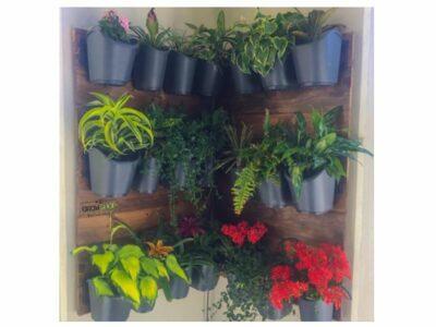 גינון צמחים בפינת הקיר בבית ומרפסת